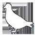 Bird of Peace